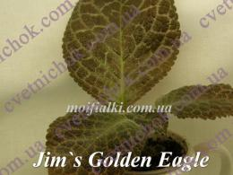 Jim's Golden Eagle