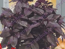 Базилик Черный Опал (фиолетовый)