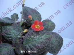 Jim's Harvest