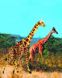 Деревянная сборная модель Жираф (с)