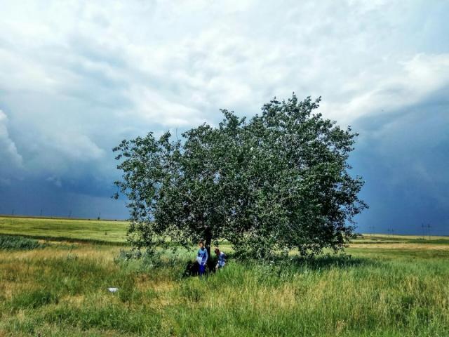 Фото Посади своё дерево {основной}