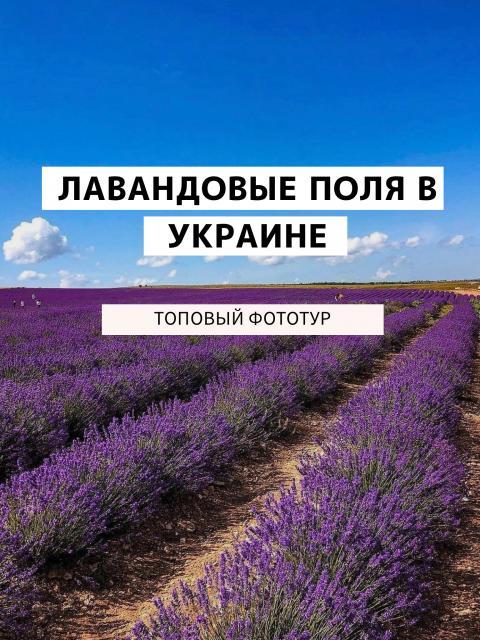 Фото Лавандовое поле - фото-тур {основной} - 23.06