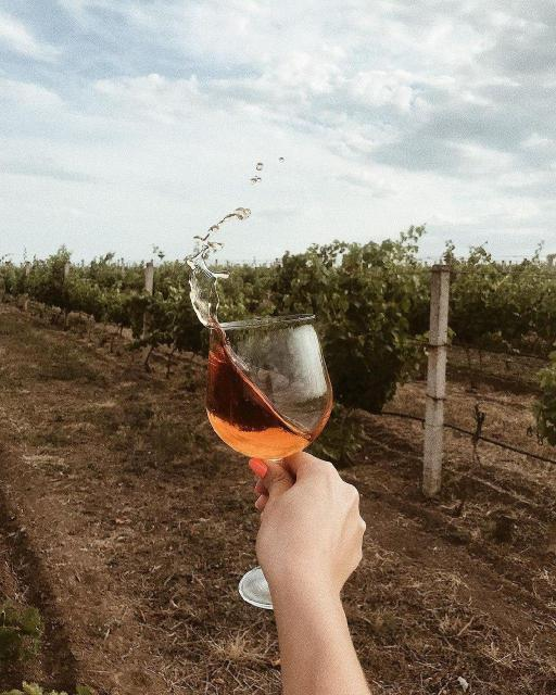 Фото Осенний релакс: сосновый бор и винодельня {основной} - корп