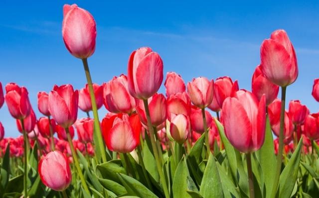Фото Долина тюльпанов и Аскания-Нова {основной} - корп