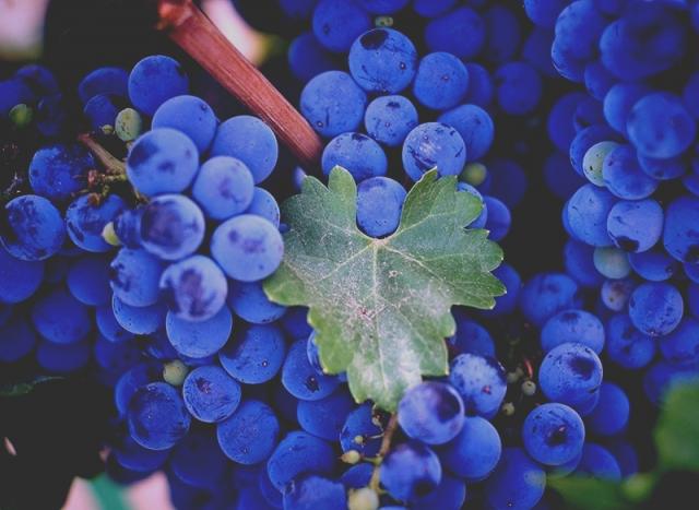 Фото Праздник молодого вина