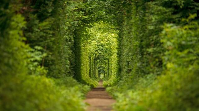 Фото Луцк и тоннель Любви на 2 дня {основной} - корп